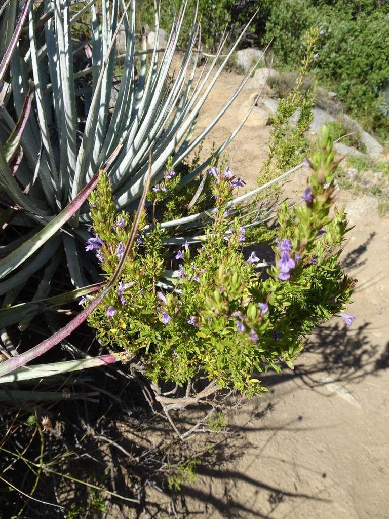 Belles fleurs et plantes durant la balade + faune