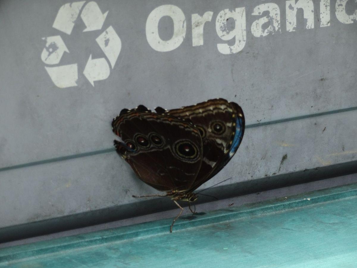 La faune n'est pas en reste. Mention spéciale pour le papillon aux ailes bleues, pas facile de le prendre en photo !