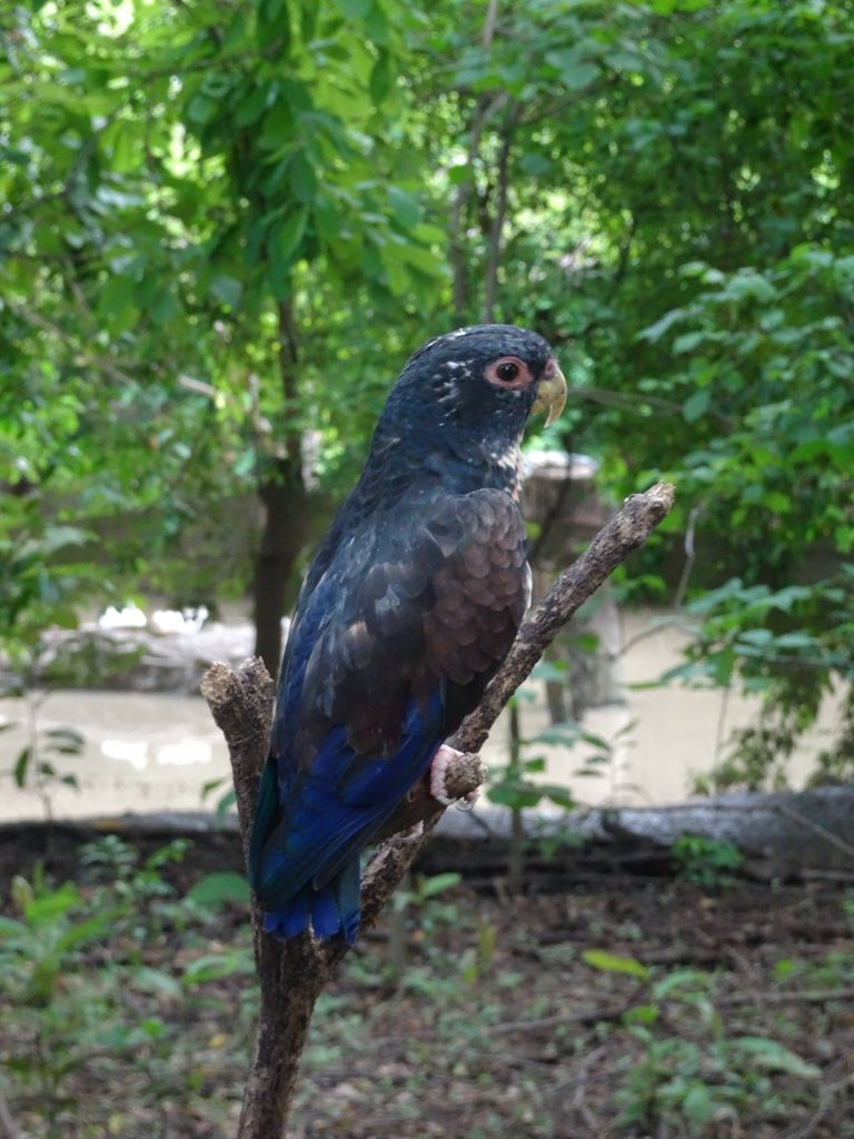 Les perroquets multicolores du Parque Histórico