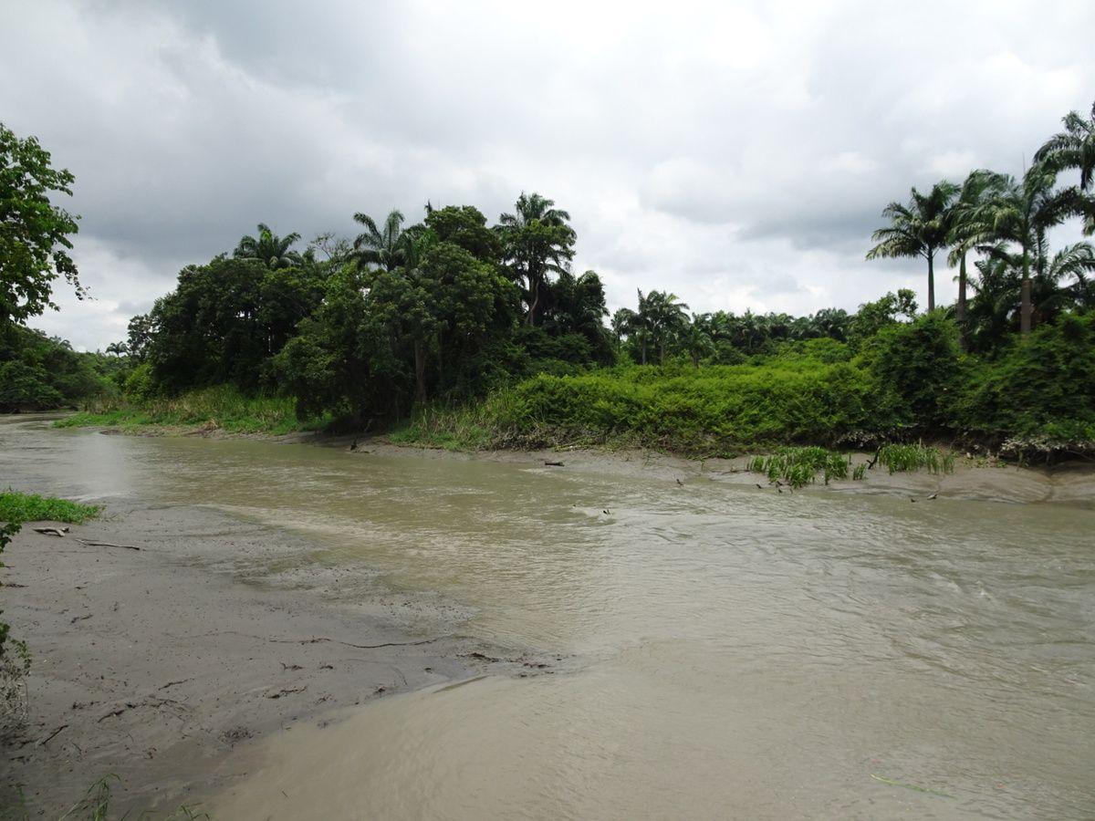 De l'écovillage part un autre petit sentier, aux airs amazoniens !