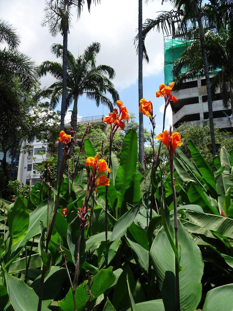 Le parc le long du Guayas