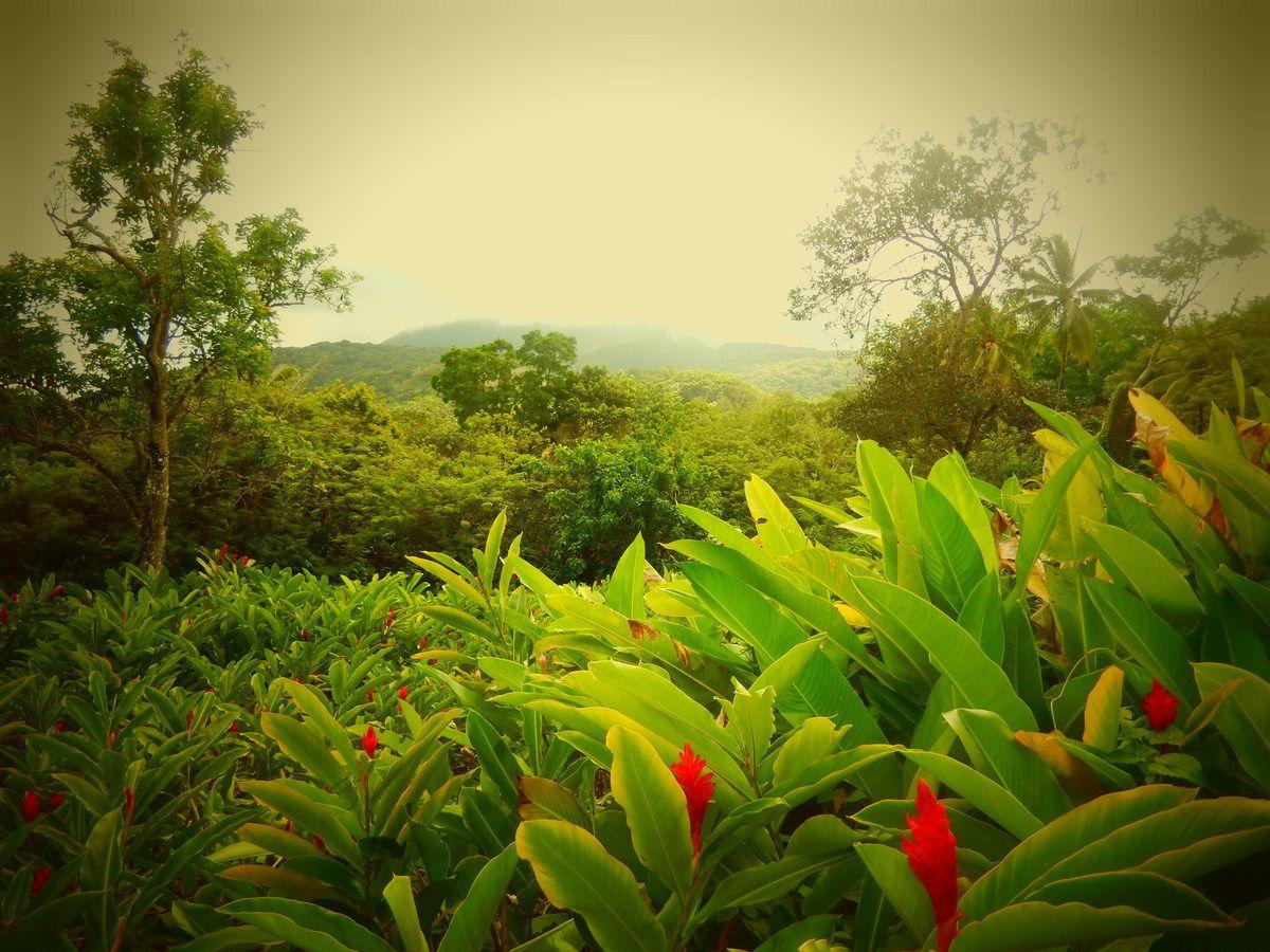 Guadeloupe - Jour 5 : Sucrerie et chutes Carbet