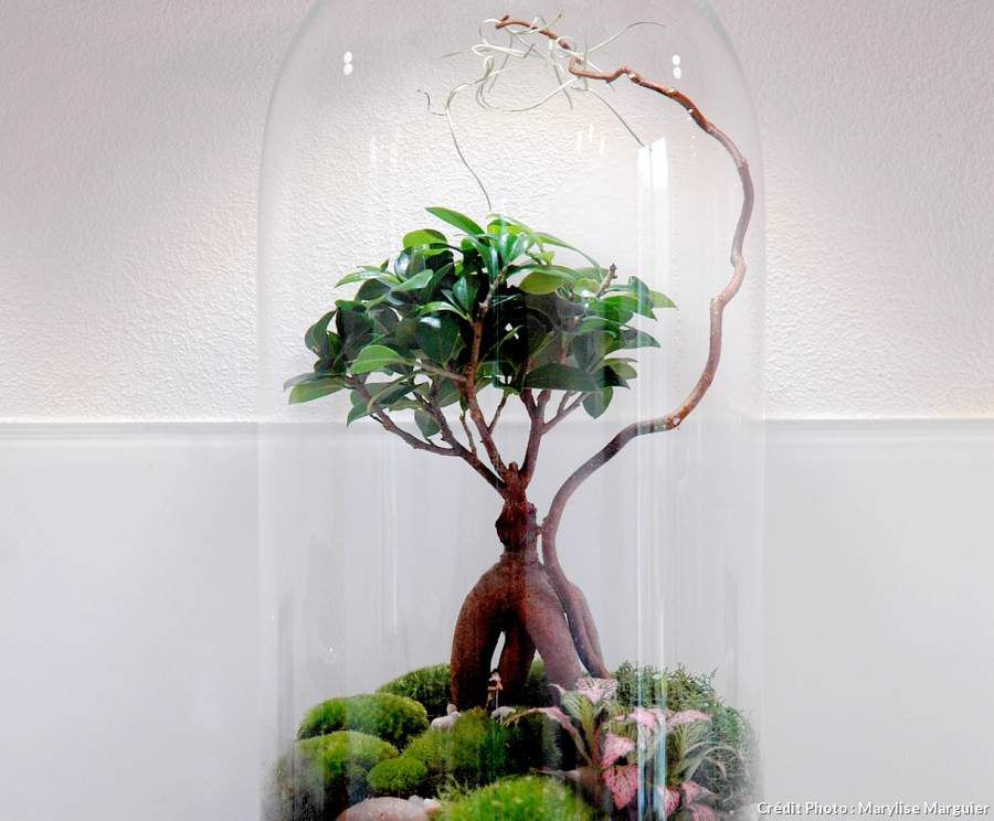 diy faire son terrarium soi m me toute une histoire by n a. Black Bedroom Furniture Sets. Home Design Ideas