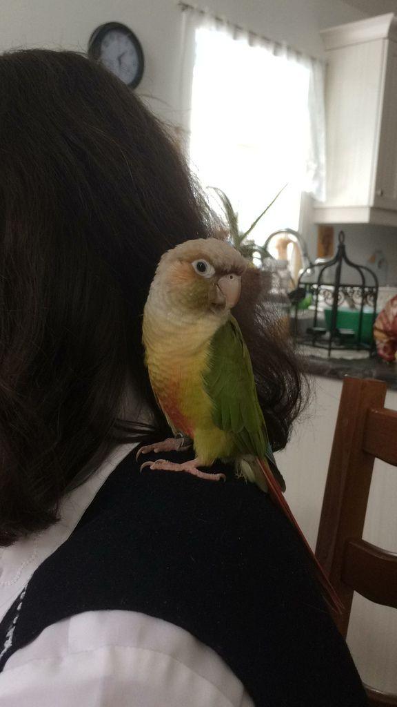 et voici Charlie le perroquet