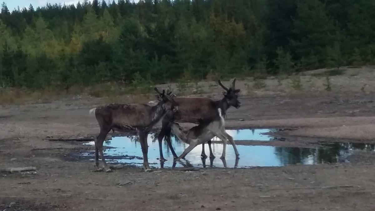 4:Rovaniemi au lac Inari