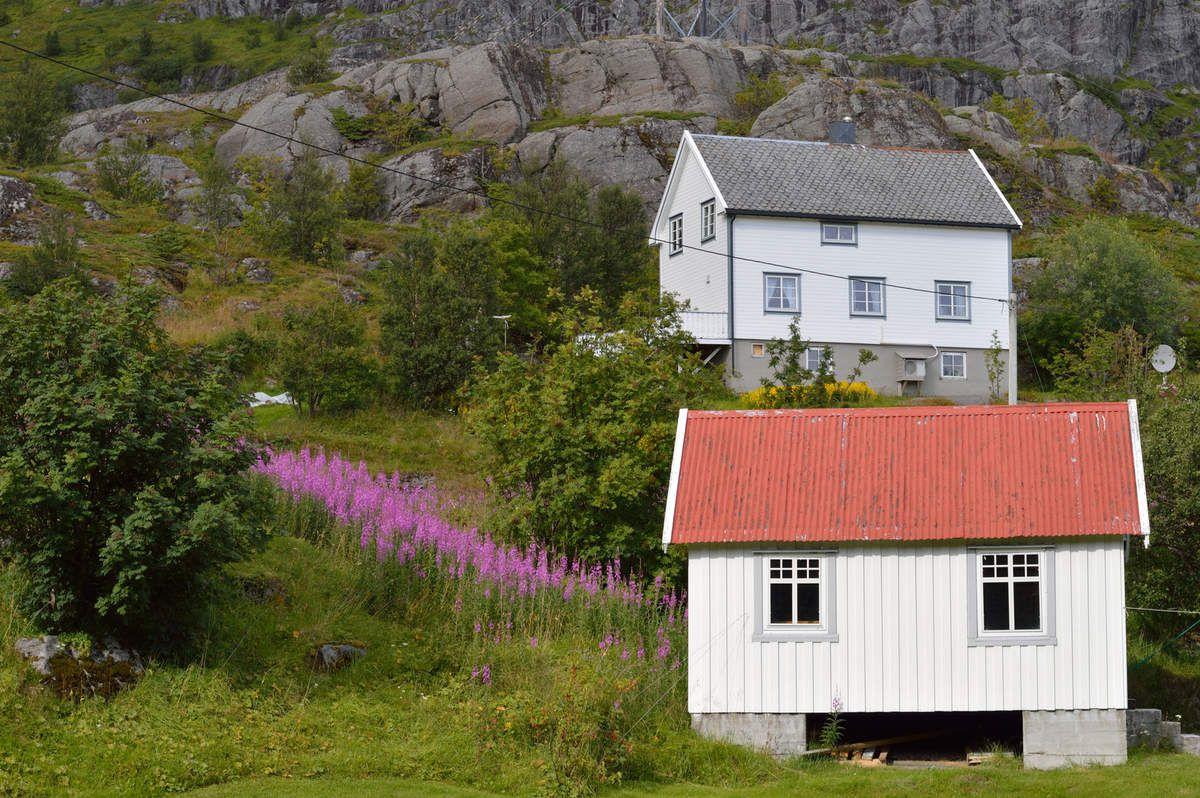 11: Îles Lofoten ( suite)
