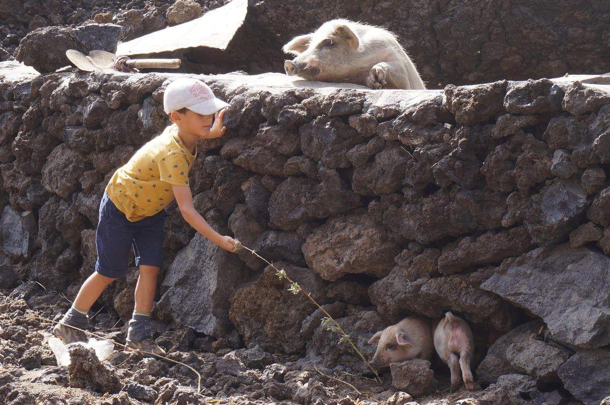 """Le Pico de Fogo, le volcan, est entouré en grande partie, à l'ouest par une grande caldeira. C'est un terrain agricole fertile, qui """"abrite"""" le village Cha de Caldeira. Détruit en grande partie par l'éruption de 2014. Si les villageois ont bénéficié lors de l'éruption de 1995 d'aides internationales, ils reconstruisent, à ce jour encore, sans aucune aide. Le gouvernement interdit à présent d'habiter la Caldeira, donc aucune subvention n'est plus allouée. Les villageois s'y sont toutefois réinstallés. Et reconstruisent peu à peu. Le forage qui alimentait la population en eau a été détruit en 2014. Seul un goutte à goutte, récolté à tour de famille, alimente naturellement le village aujourd'hui. Une pension se fait livrer en eau dessalée de Sao Filipe. Dans cette caldeira pousse une vigne magnifique, des caféiers, figuiers, pommiers, cognassiers, pêchers, grenadiers.... Fogo est un réservoir alimentaire, et """"exporte"""" fruits et fromages vers Praia. Sur Fogo, le métissage est très marqué, et évoque le nom de Armand Montrond, bourguignon d'origine, réfugié en 1860, personnage légendaire, apprécié des locaux. Il a développé la culture du café, du vin, et a eu une progéniture en grand nombre, engendré des dizaines d'enfants aux yeux et cheveux clairs. Aujourd'hui, beaucoup de familles sur l'île portent son nom, et les petits blonds métissés, ou les yeux si clairs, sont autant de clins d'oeil à leur aieul légendaire...."""