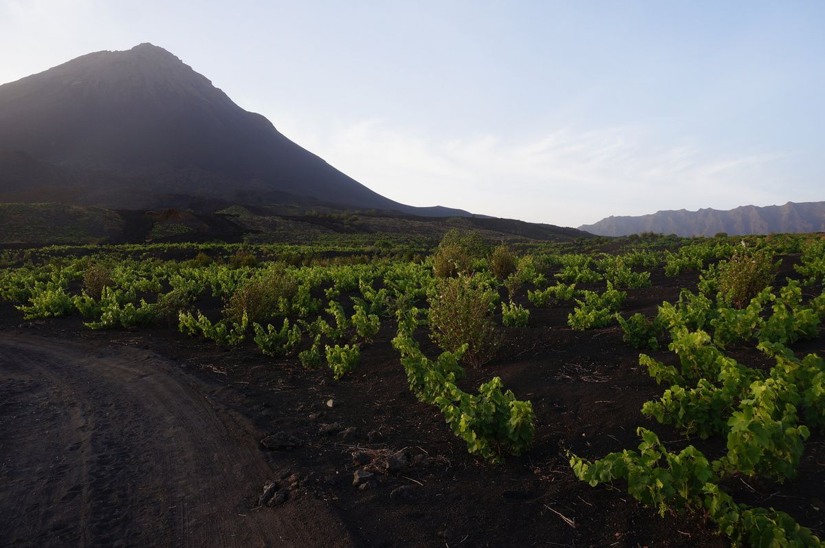 """Montée par le côté le plus praticable, puis descente sur une face de pouzzolane, """"poudreuse"""" de volcan, jusqu'au petit Pico, bouche qui crache actuellement. On voit bien en arrivant au dessus la coulée de 2014, la route coupée puis retracée à la limite de la coulée."""