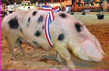 Rillettes De Porc De Bayeux