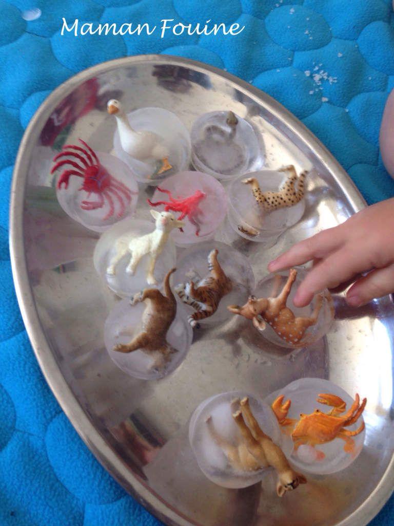Animaux à délivrer des glaces