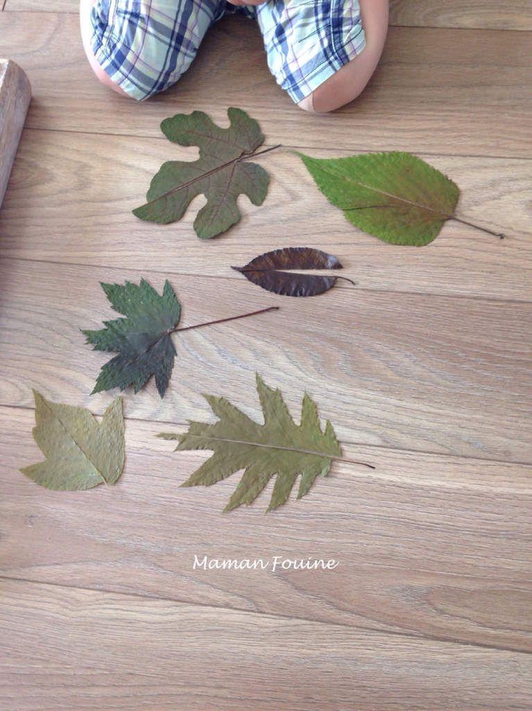 Puzzles de feuilles