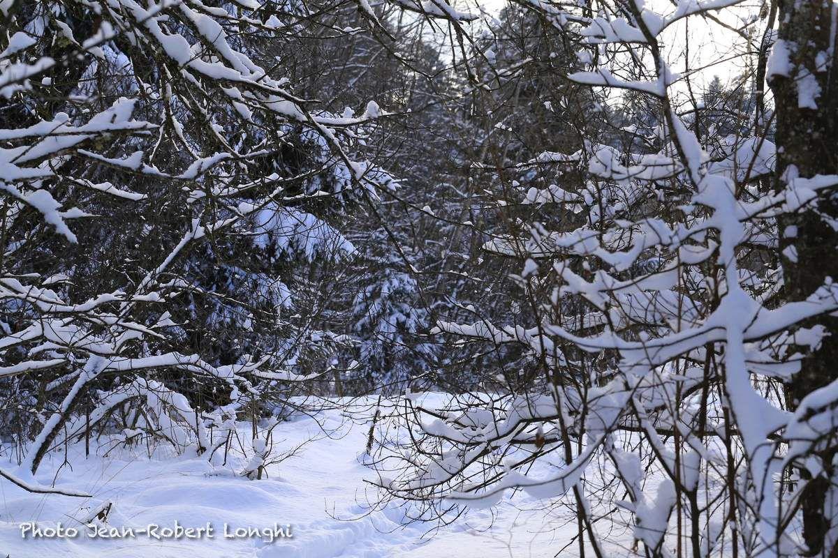 Etang du Barchet sous la neige