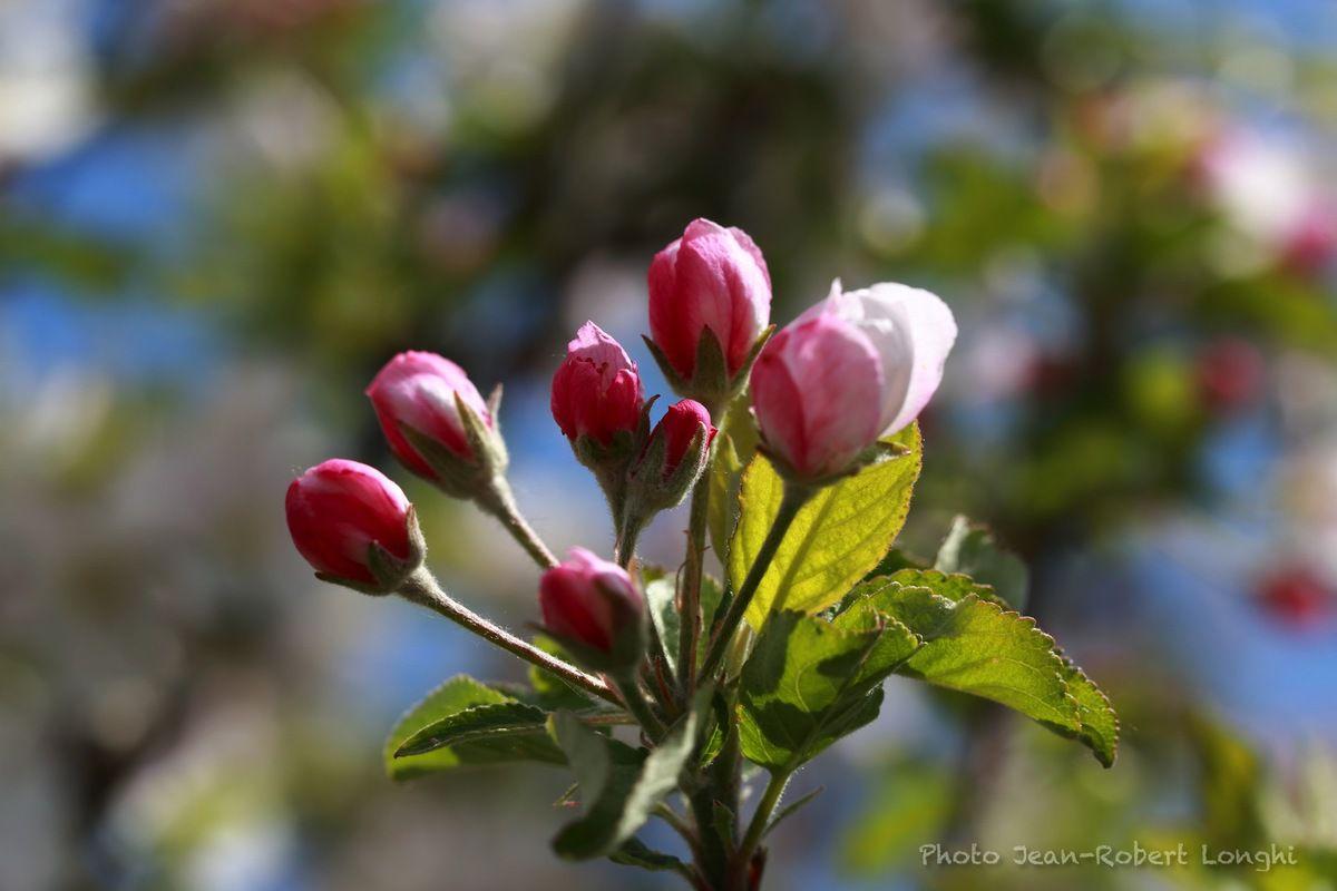 Doubs printemps