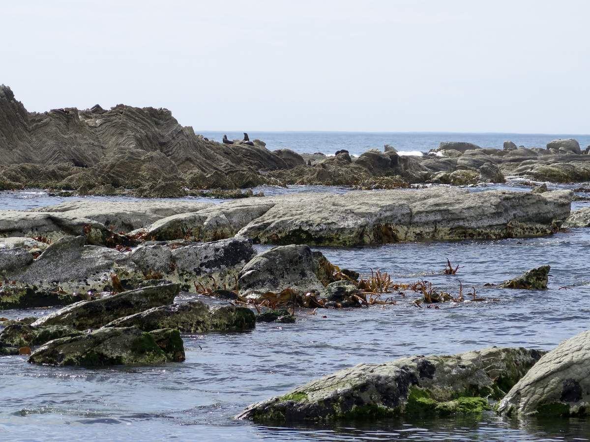... détruisant même, au nord d'ici, une colonie de phoques comme celle-ci.