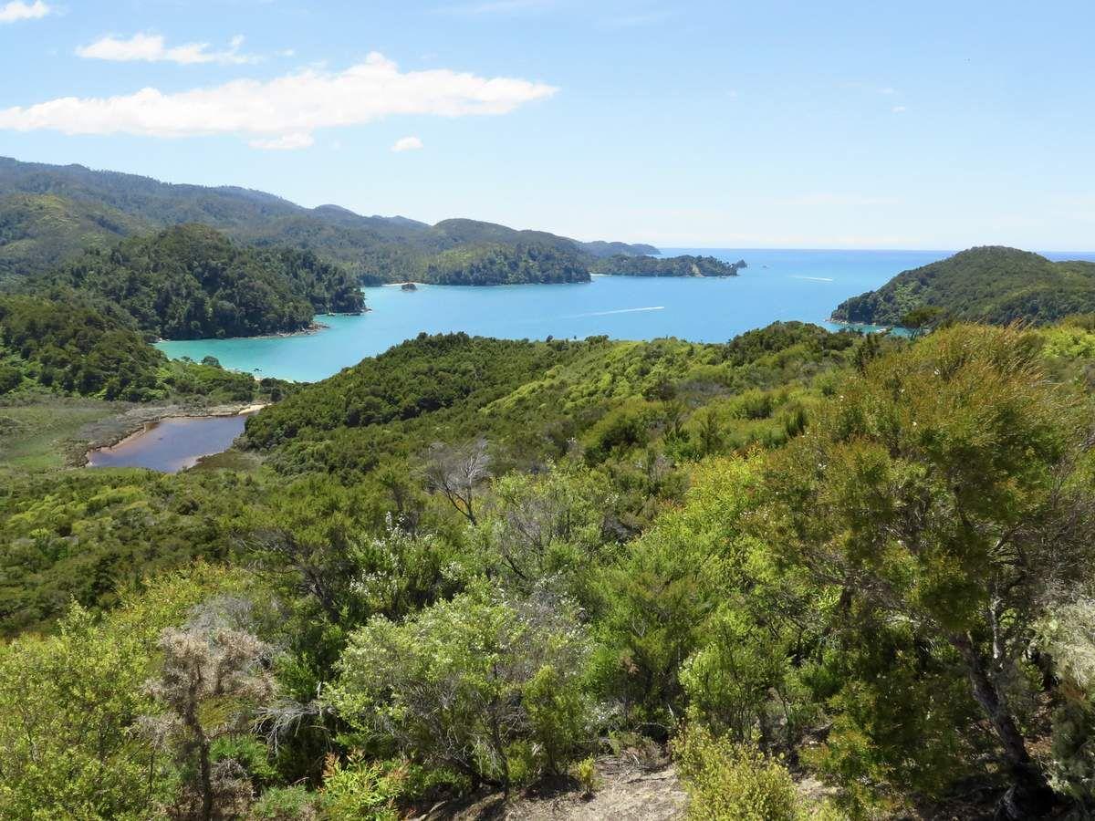 Dans le paysage idyllique de l'Abel Tasman National park se côtoient des Manukas et des Kanukas tellement typiques de ces îles.