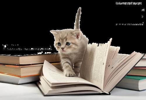 Mais oui les minous aussi la littérature ! Vous n'avez pas remarqué combien ils aiment les livres, les journaux même, surtout .. ils aiment les lire en votre compagnie !!!