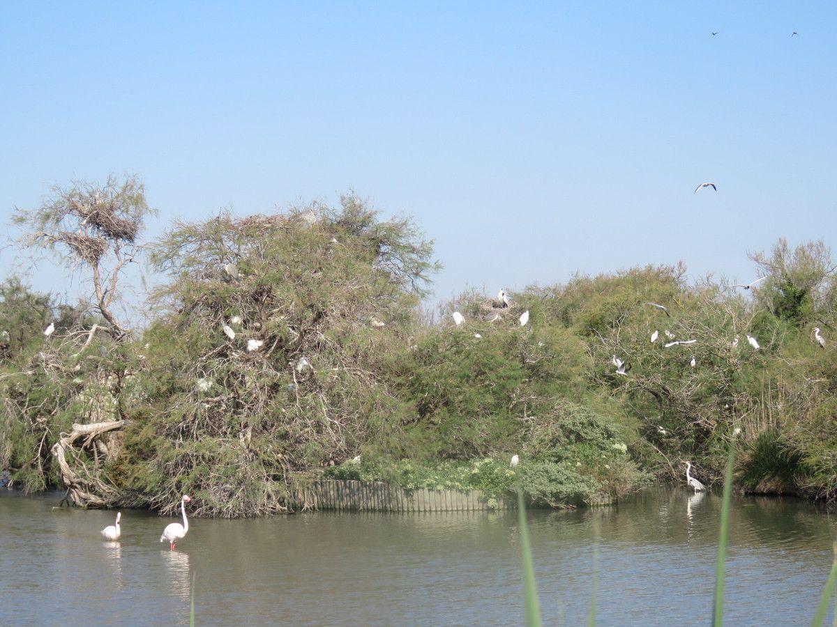 La Héronnière, le site de nidification pour les Hérons et autres grands échassiers.