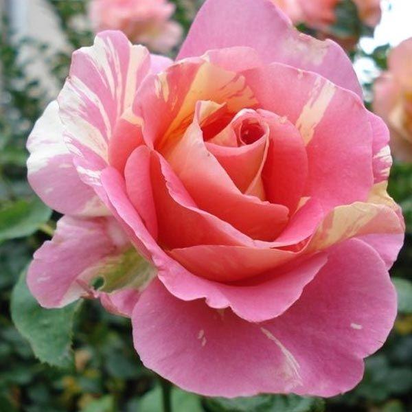 Claude Monet   &quot&#x3B;En dehors de la peinture et du jardinage, je ne suis bon à rien ! .&quot&#x3B;