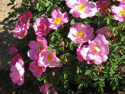 photo le jardin de cheneland