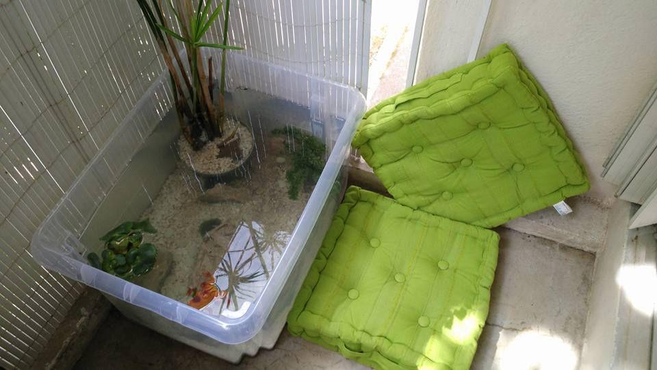 bassin en balcon. Black Bedroom Furniture Sets. Home Design Ideas
