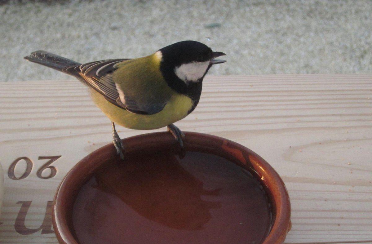 Donner à boire aux oiseaux l'hiver