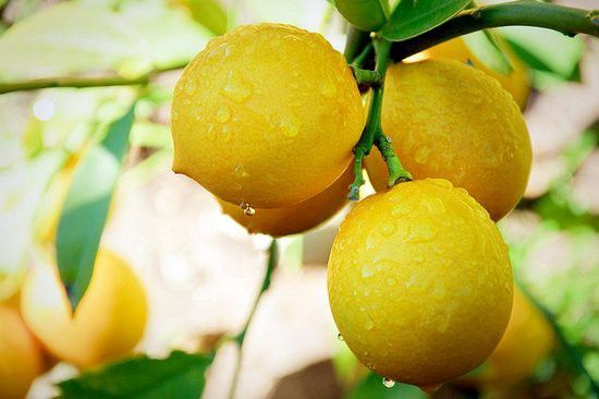 (Citrons d'Arizona, photo www.phoenixnewtimes.com)