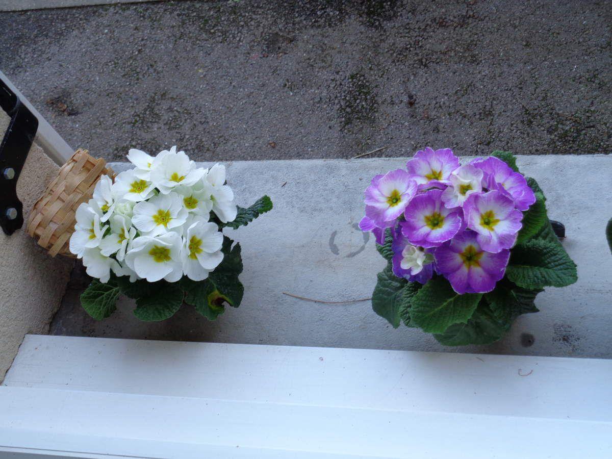 nouvelles fleur a planter