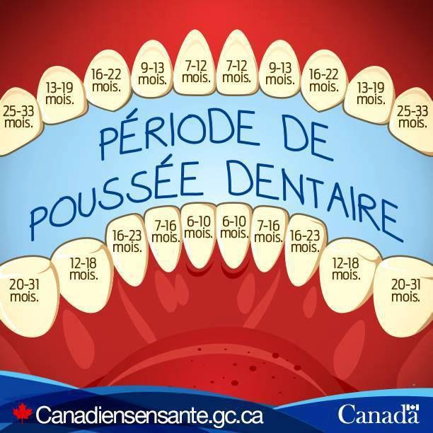 Pour bébé : la poussée dentaire au fil des mois , à télécharger et imprimer gratuitement !
