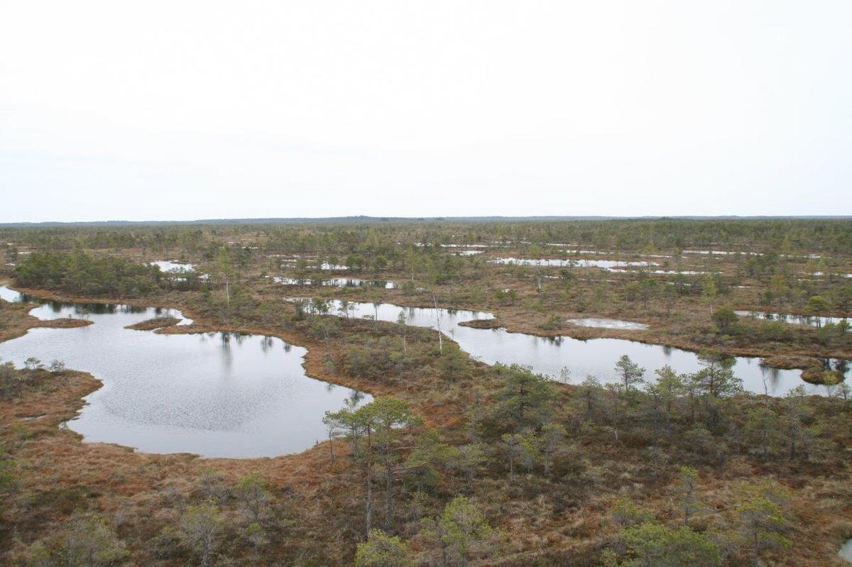 ballade de 3 km a travers les marais . bien malheureux celui qui voudrait quitter les planches. la tourbe par endroit est molle et profonde de 11m
