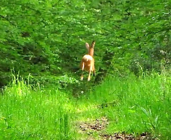photos choisies en forêt de Retz