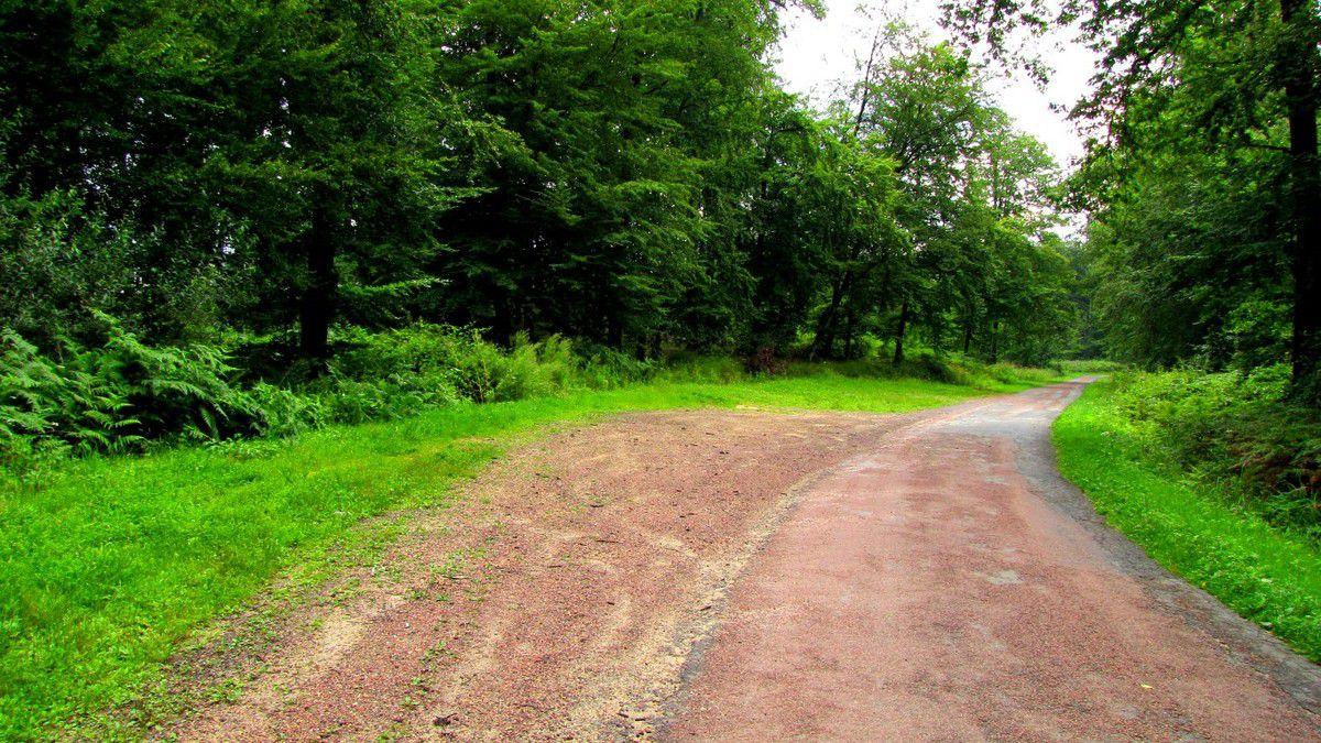 le carrefour des Fonds Houchard en forêt de Retz