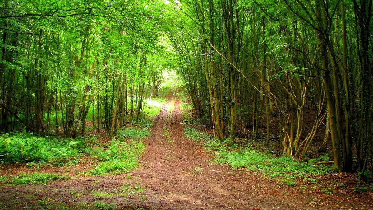 en forêt de Retz_55_07_2017_La Ferté-Milon_le bois de Borny_AR