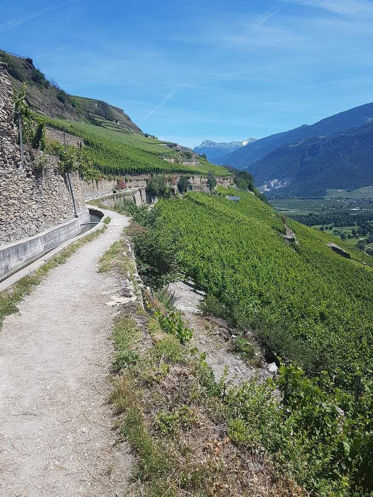 """""""Le chemin des vignes"""", the vineyear's camino"""""""