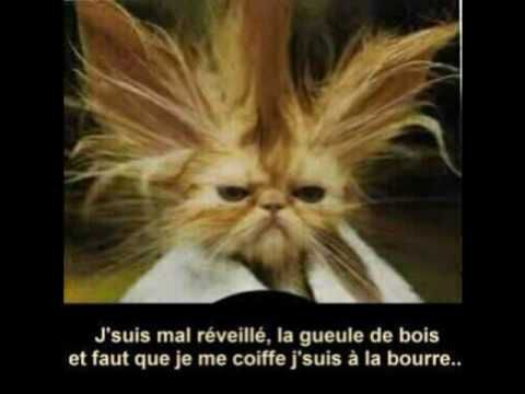 animaux mdr