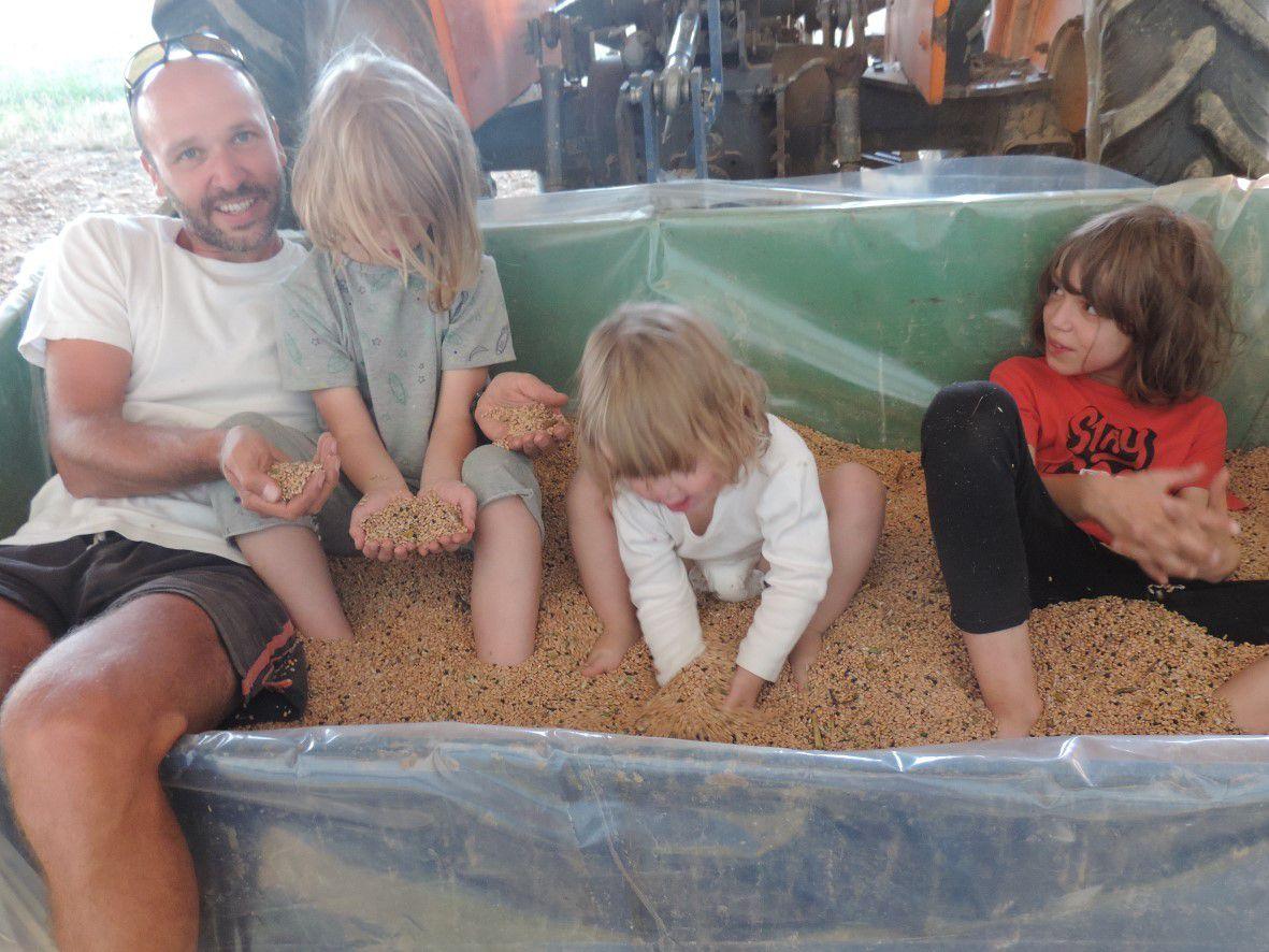 Le blé récolté dans la benne (au moins 200kg) qui fait la joie de tout le monde !