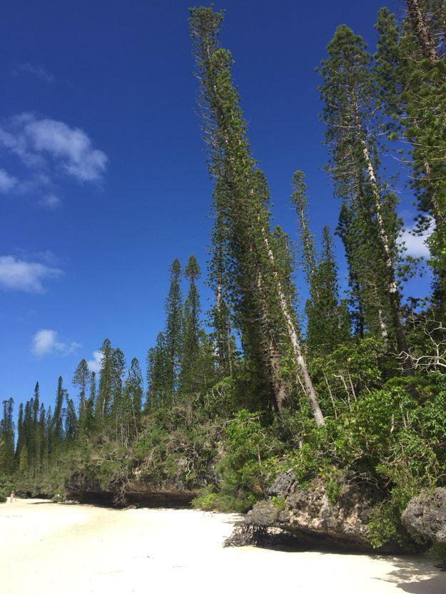 Île des pins et sa piscine naturelle