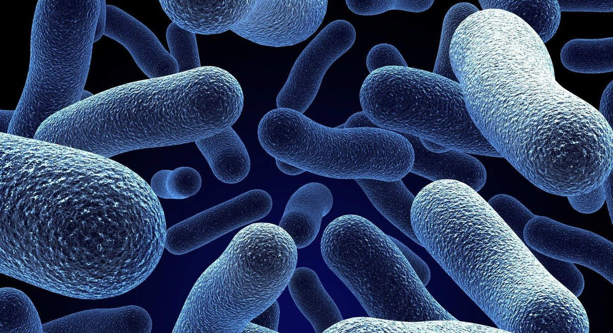 Probiotics and its Effects
