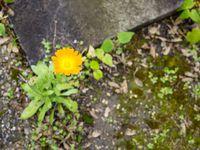 Fleurs naturelles aux couleurs plus vives