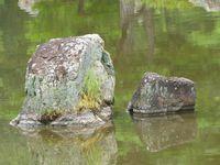 Bon, alors voici différentes photos prises au palais d'or ou lorsque l'on s'y rendait. Il y a donc des ouvriers méticuleux remettant en place les cailloux. Ainsi qu'une graaaaande porte. Puis le palais d'or et son reflet. L'étang sur le côté du palais. Une araignée d'eau. Un rocher et son reflet. Un petit filet d'eau. Puis an other one. Et enfin, une statue au milieu d'un autre étang. ♪ -fière-