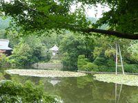 [...] On a aussi des filets d'eau entre les arbres, des forêts, des maisons, des portes, des nénuphars, des canards...! ♪