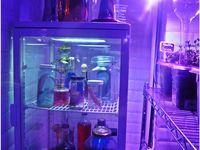 Le Mojito Lab: ambiance mojitos, club, néon et laboratoire.