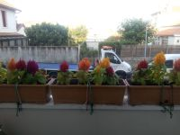 Mon concours des balcons fleuris