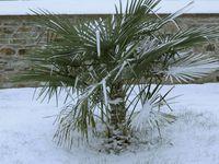 quelques photos de notre jardin sous la neige