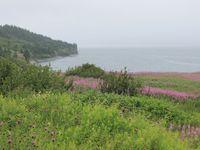La Gaspésie sous la pluie