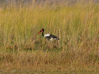 29/08/2013 - Parc de Moremi, vers le coeur de l'Okavango