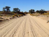 22/10/2013 - Kgalagadi Transfrontier Park (KTP), Part 2 : la vallée de la Nossob
