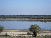 Imaginez-vous aux abords d'un lac. L'eau, les légères vagues et cette végétation si belle et luxuriante, sa faune avec ses oiseaux, ses Grues... - Nature Photos, Tous droits réservés © 2013