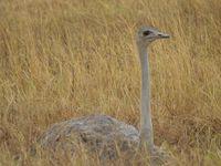 Au Pays de Simba : Ngorongoro crater
