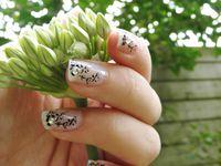 Fleurs blanches de printemps