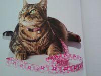 J'ai reçu le livre Accessoires pour chiens et chats pour faire des DIY !